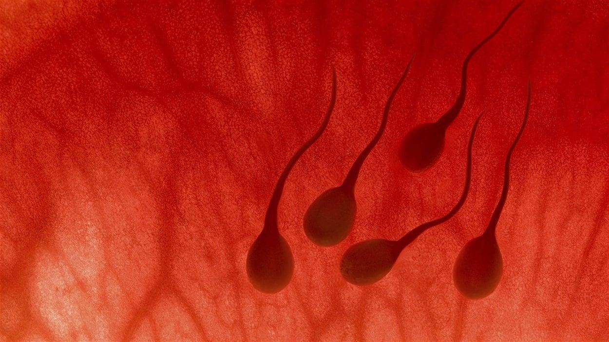 Le sperme serait en déclin en France, selon une étude