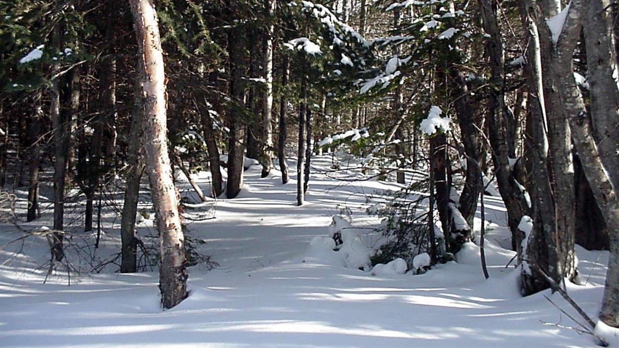 Sentier en foret durant l'hiver
