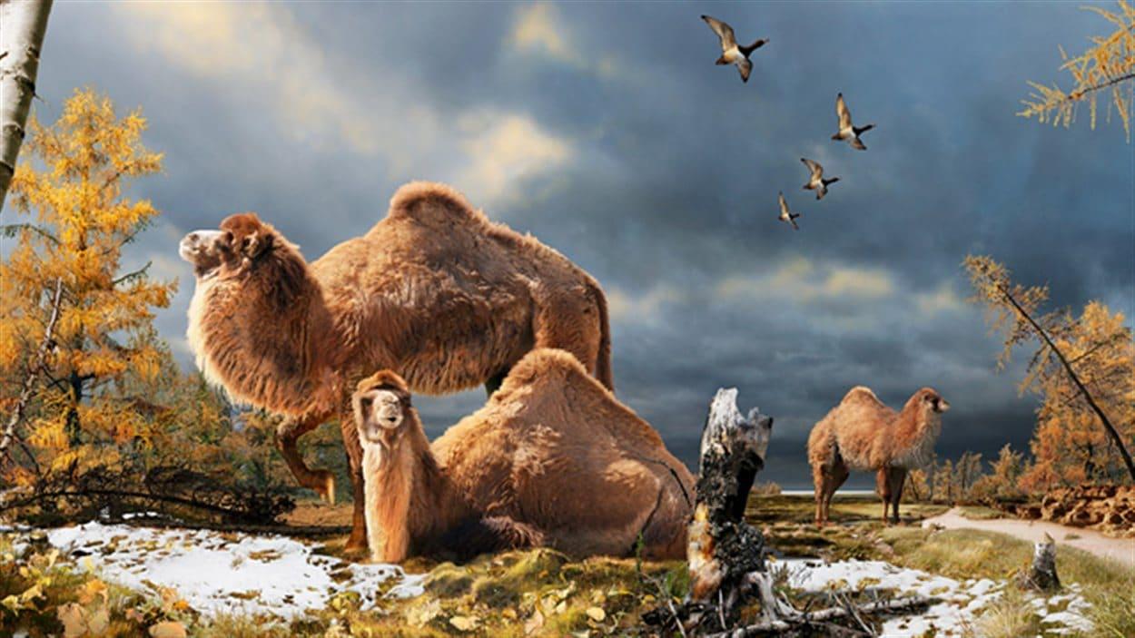 Représentation artistique du chameau