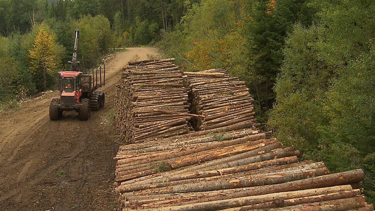 récolte de bois en foret