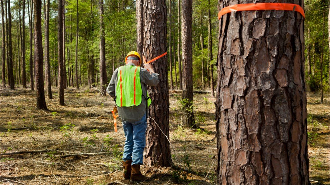 Travailleur forestier