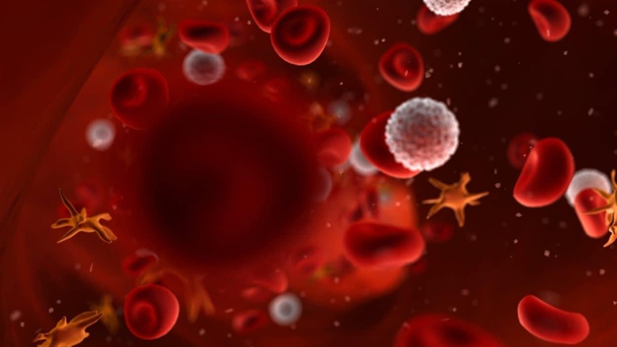 Représentaiton des composants du sang humain: les globules rouges et blancs, ainsi que les plaquettes.