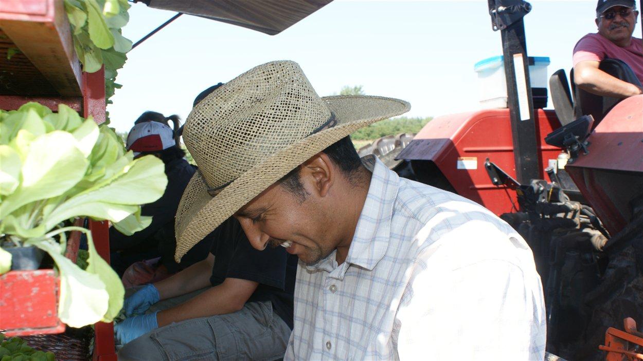 Travailleurs agricoles étrangers au Québec