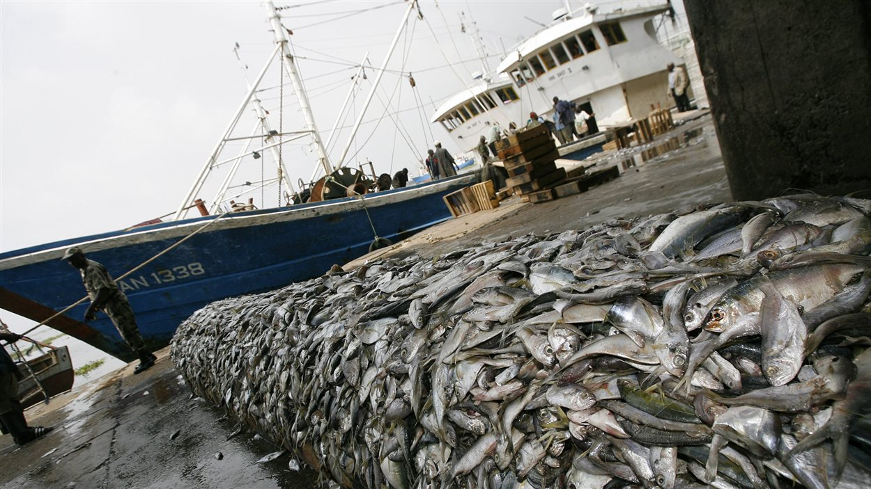 Poissons saisis à bord de deux bateaux chinois, interceptés dans les eaux de la Côte d'Ivoire pour avoir utilisé du chalutage par le fond, une pratique interdite par les lois ivoiriennes. (27 décembre 2007).