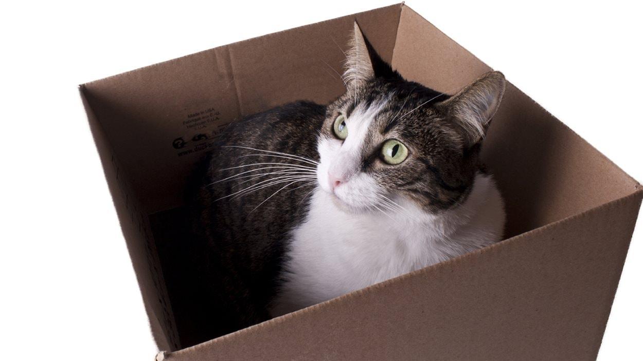 Un chat dans une boîte de carton