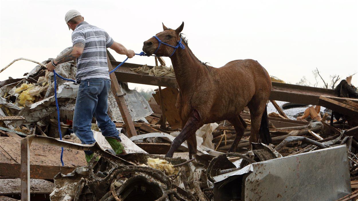 Un cheval sauvé d'une ferme dévastée.