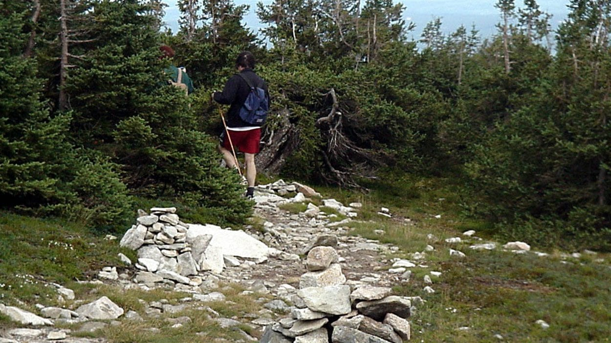 Le Sentier international des Appalaches traverse le parc de la Gaspésie jusqu'au cap Gaspé. Il s'agit d'une randonnée de près de 100 km pour traverser le parc de la Gaspésie d'est en ouest.