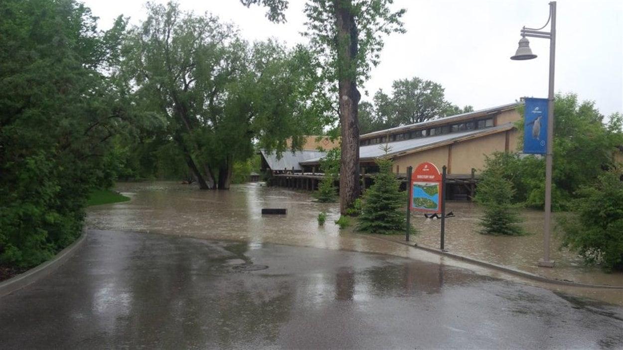 L'eau a envahi le zoo de Calgary.