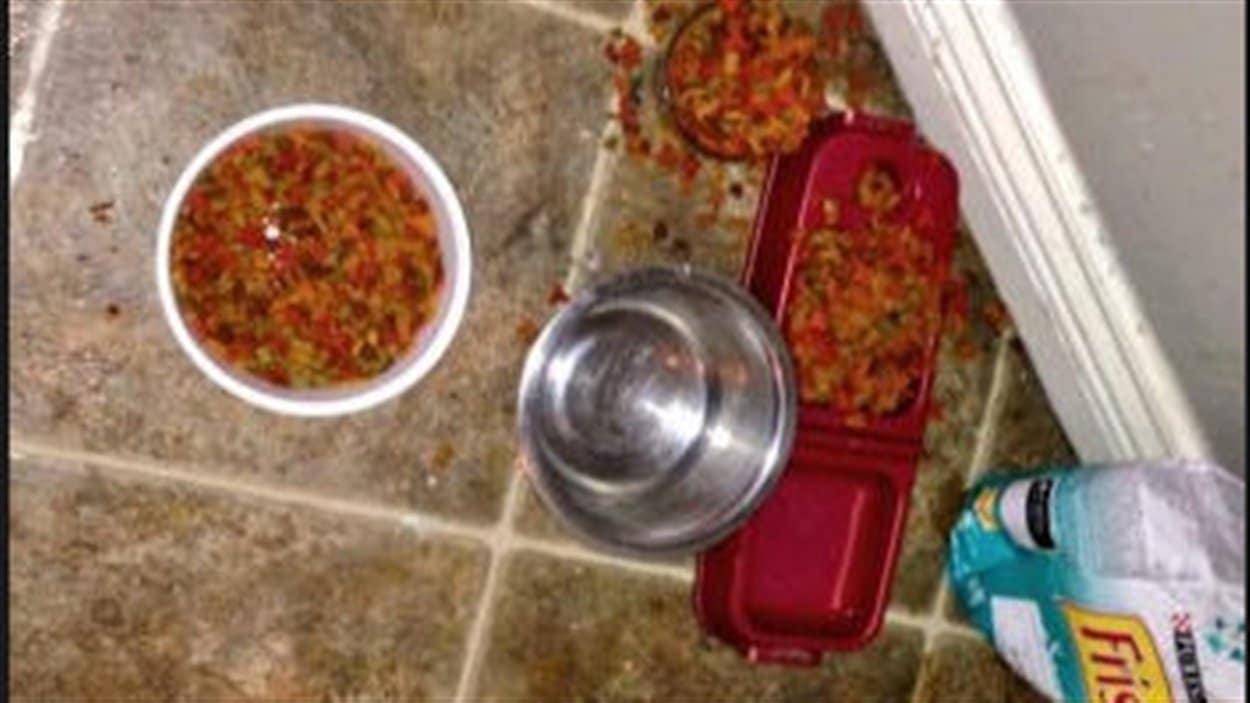 Nourriture pour chats renversée par terre.