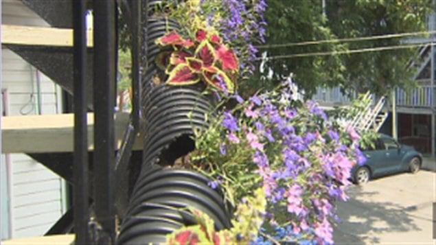 Une ruelle fleurie dans Sainte-Cécile à Trois-Rivières