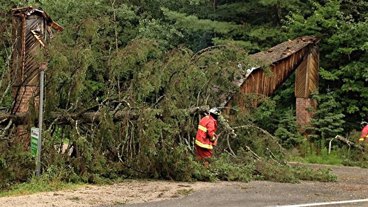 Des pompiers doivent retirer des arbres tombés lors de l'orage sur le chemin Faubert, dans le quartier Edelweiss, à La Pêche.