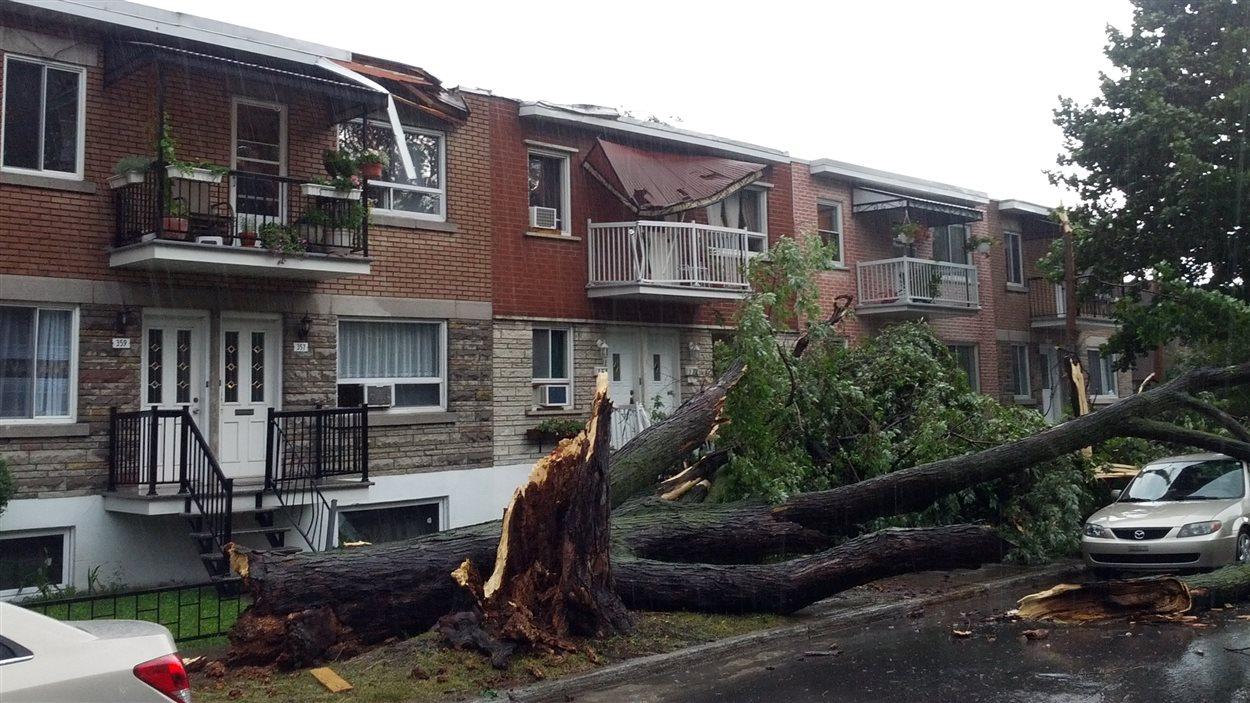 Dégâts dans l'arrondissement Mercier-Hochelaga-Maisonneuve, à Montréal