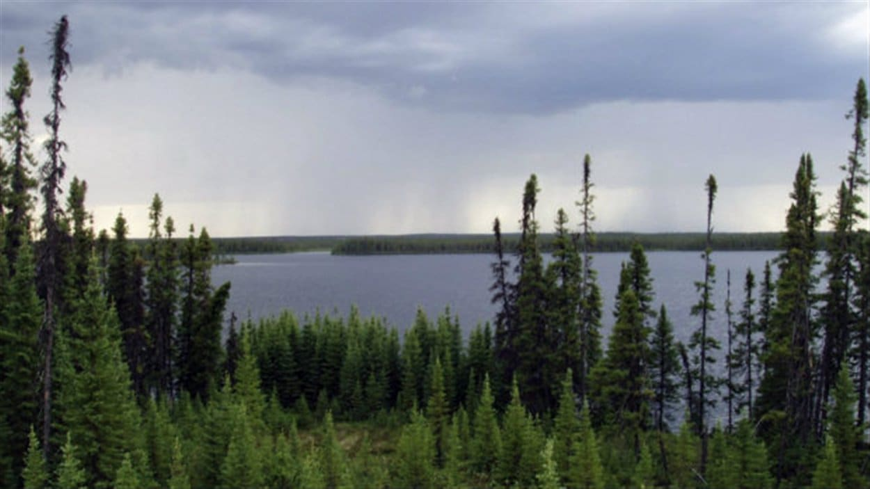 La forêt boréale au Canada