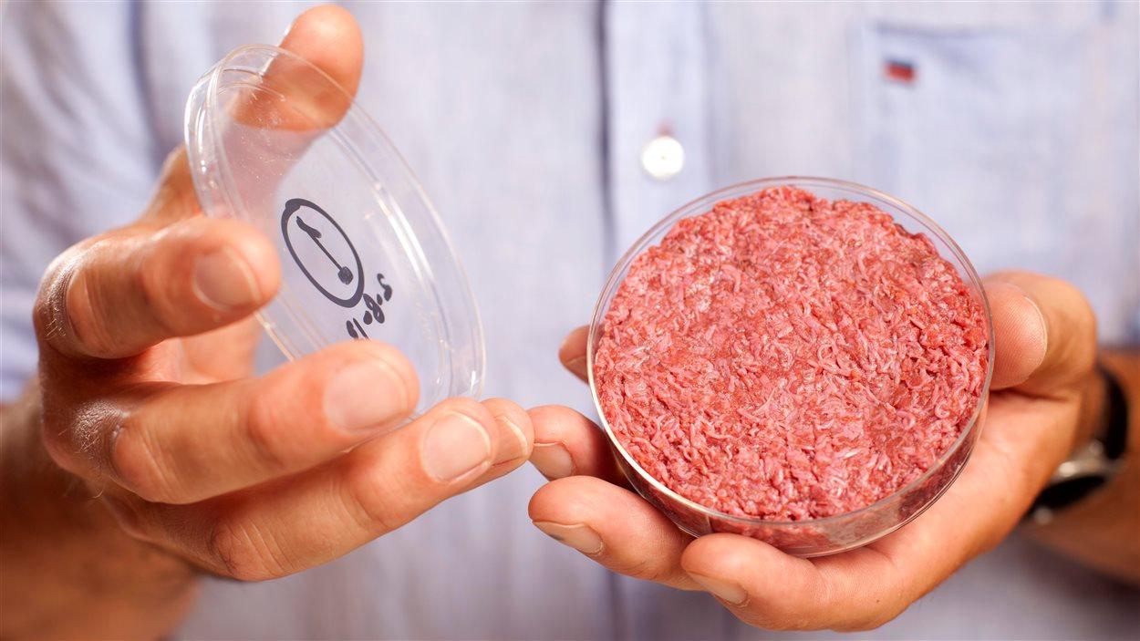 De la viande conçue in vitro.