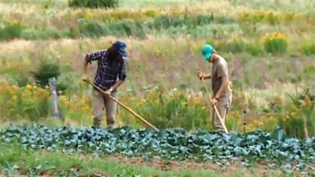 Des agriculteurs au Nouveau-Brunswick