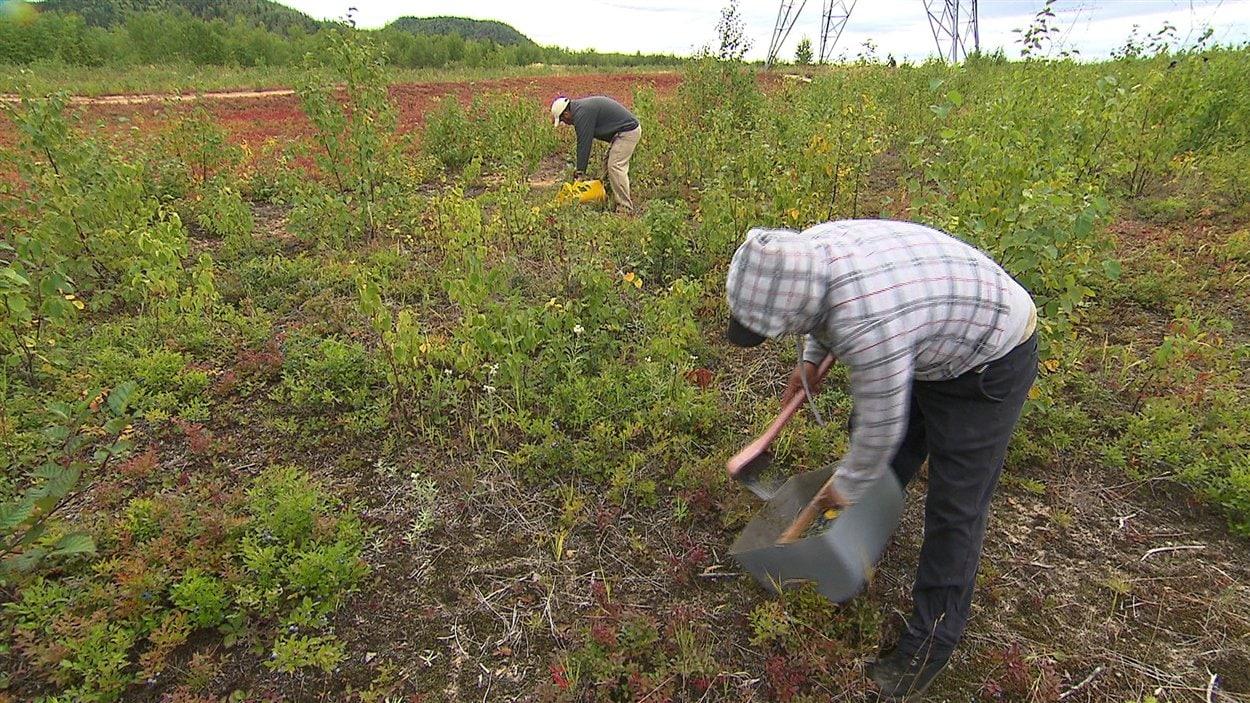 Des travailleurs mexicains dans les champs
