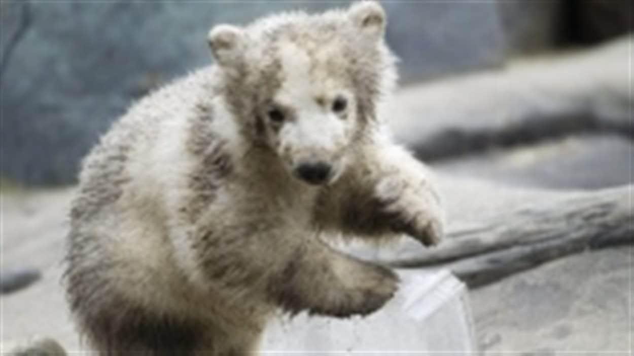 Hudson lorsqu'il était encore un ourson.