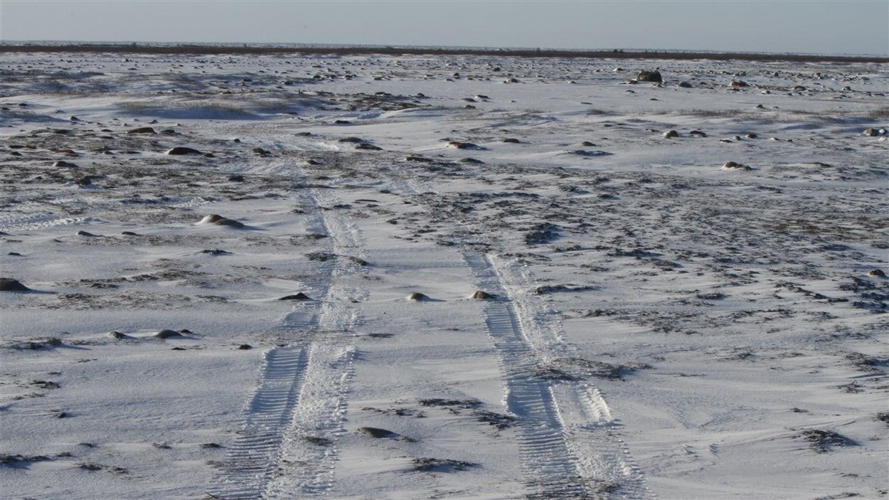 Des traces de Tundra Buggy à bord desquels les touristes partent observer les ours.
