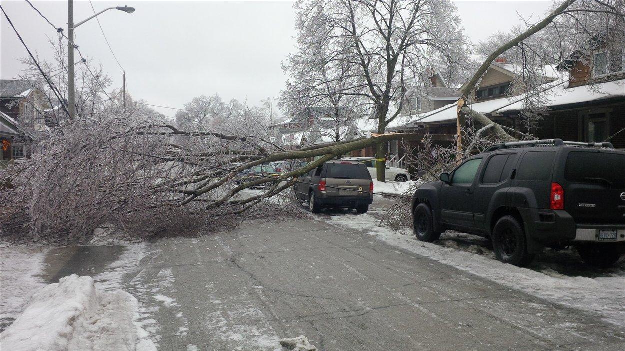 Un arbre est tombé sur un véhicule dans l'est de Toronto
