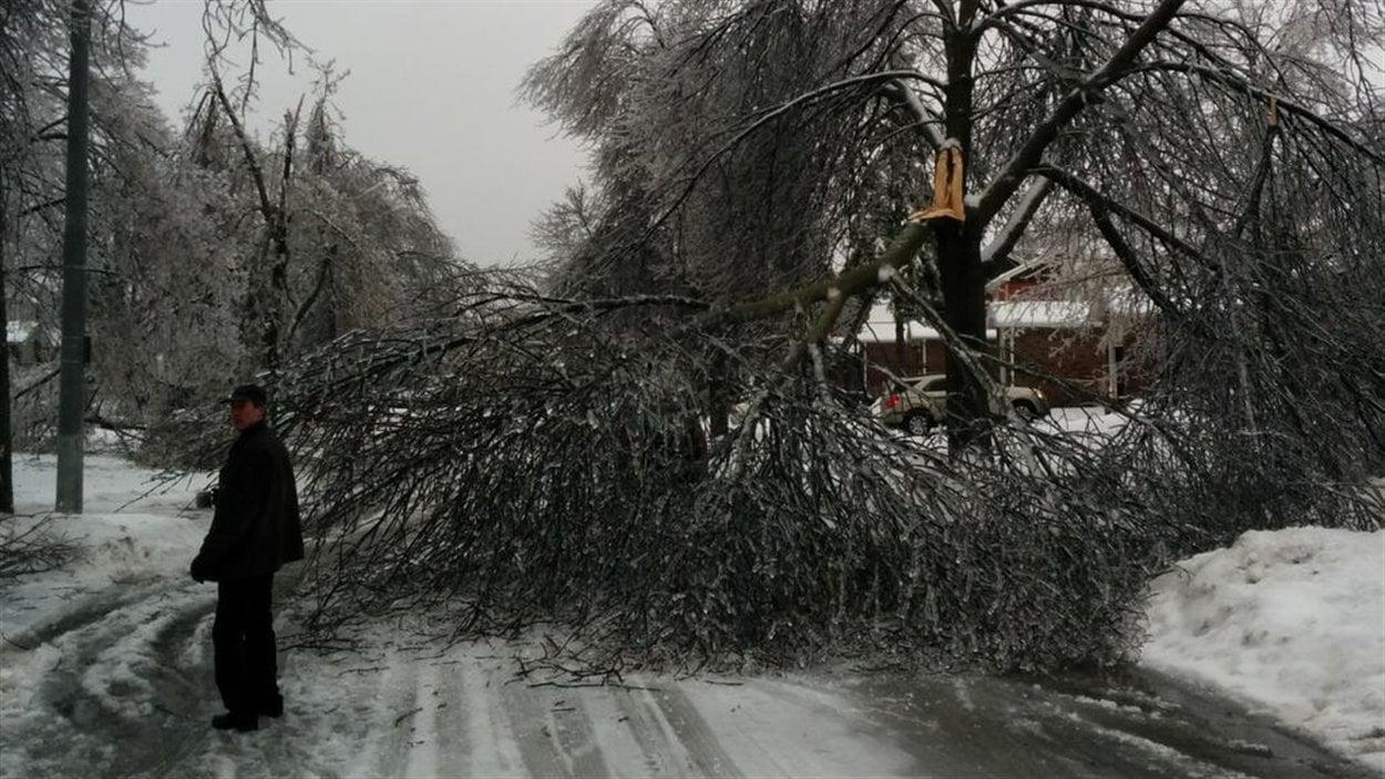 Un arbre brisé par la glace