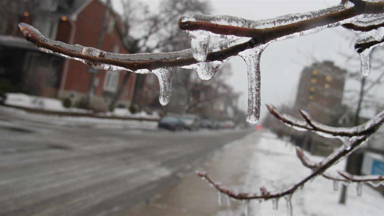 Plusieurs millimètres de glace s'accumulent sur les arbres et le sol à Toronto.