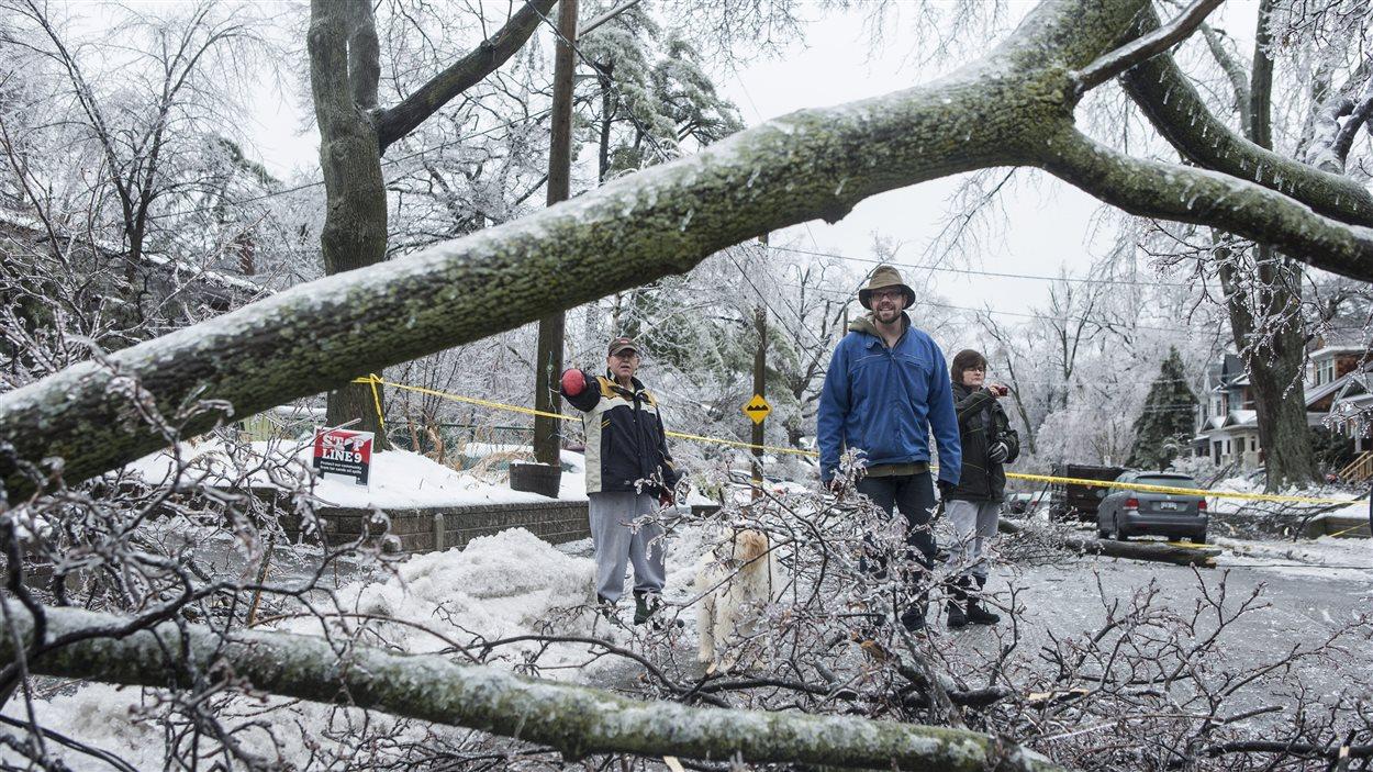 Dommages causés par le verglas dans l'est de Toronto.