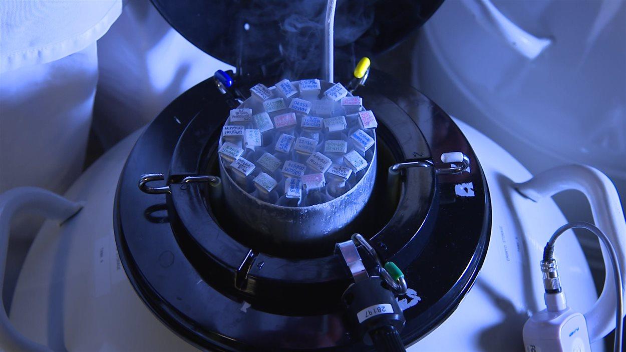 Cryopréservateur