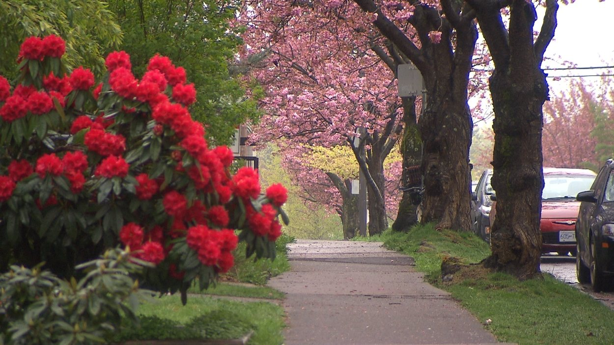 Un trottoir bordé d'arbres à Vancouver.