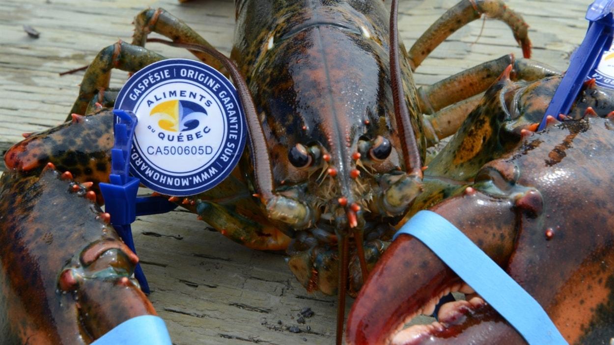 Le homard de la Gaspésie
