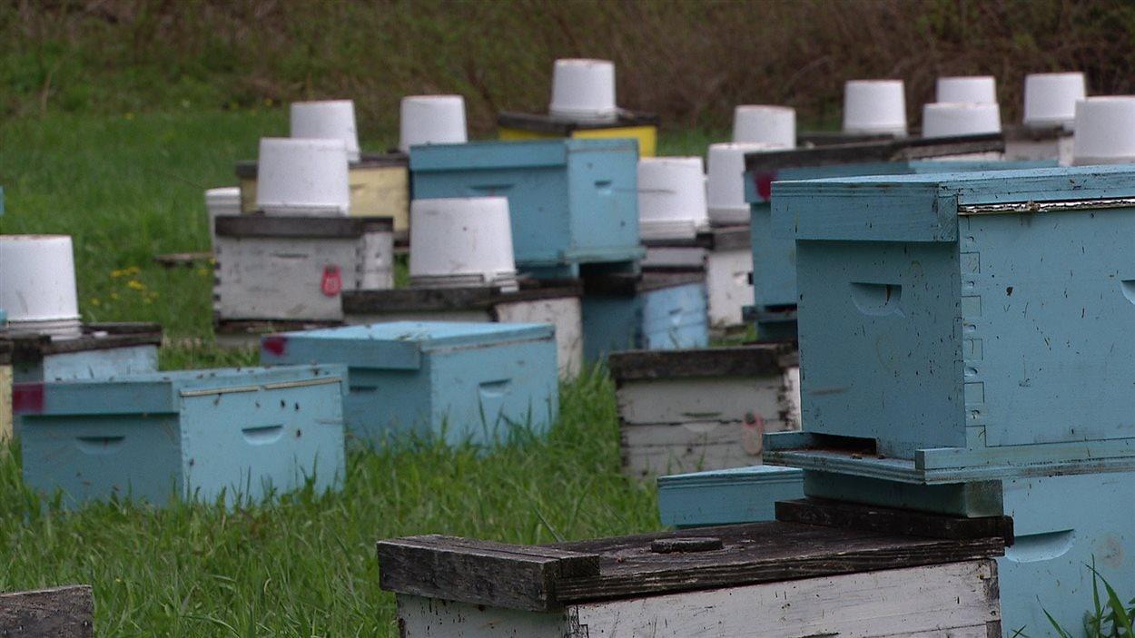 Des ruches près du Vieux Moulin