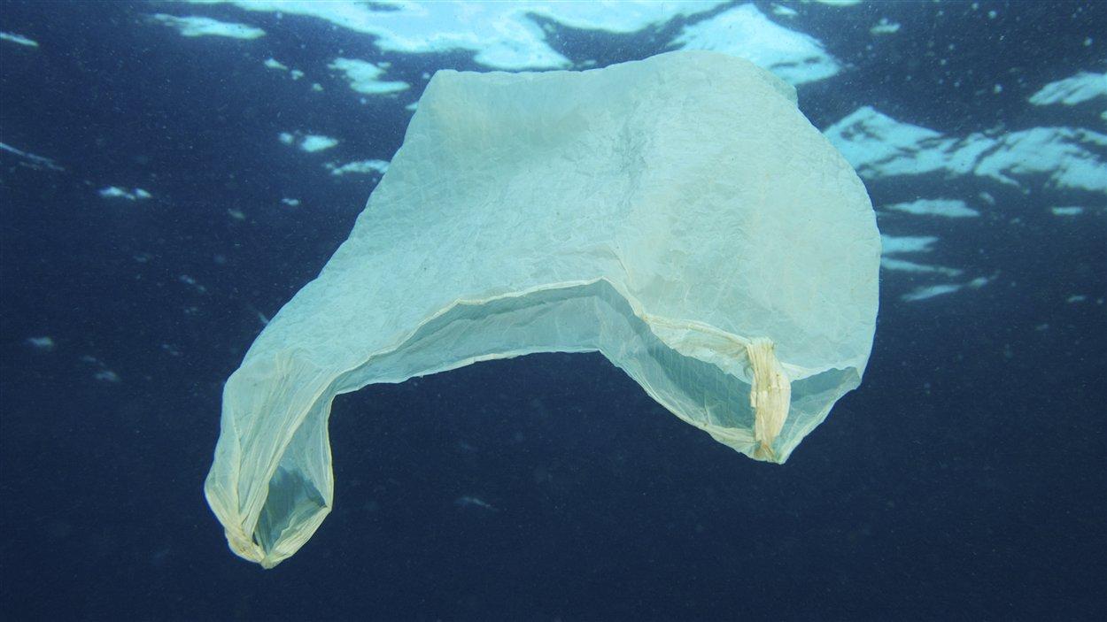 Un des milliards de sacs de plastique à la dérive dans les océans