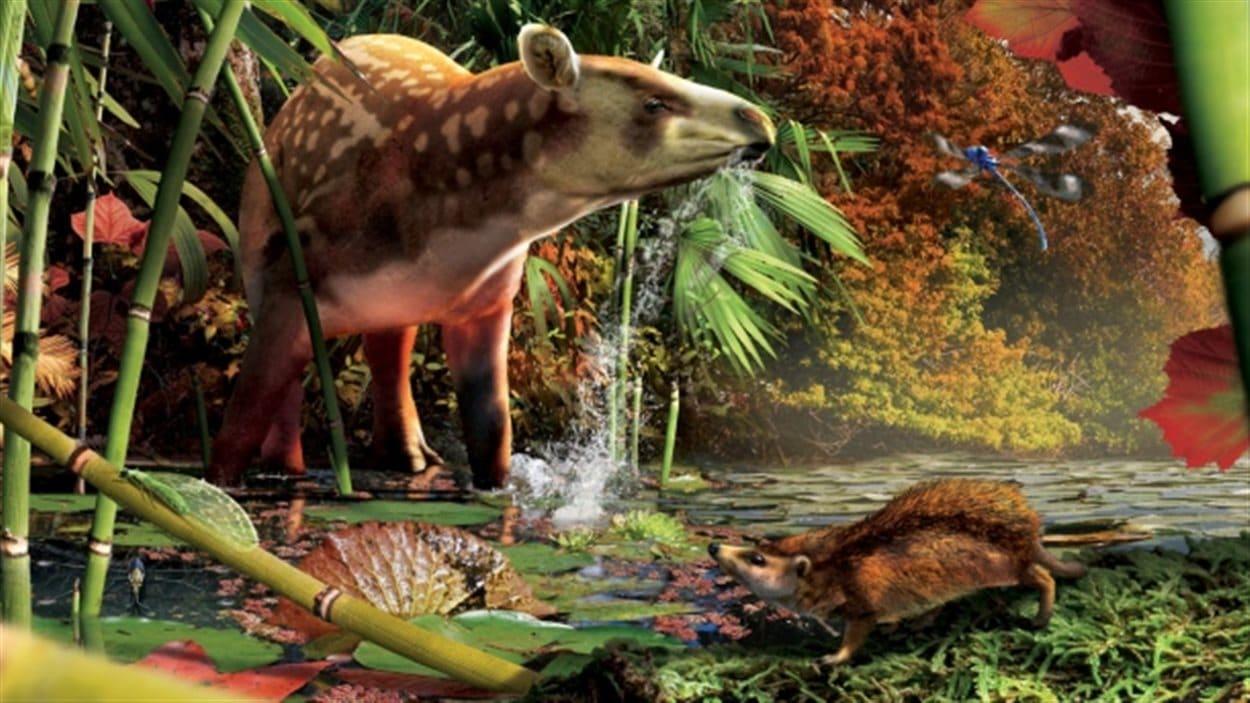 Le tapir et le hérisson dans une reconstitution de leur milieu de vie, il y a 52 millions d'années.