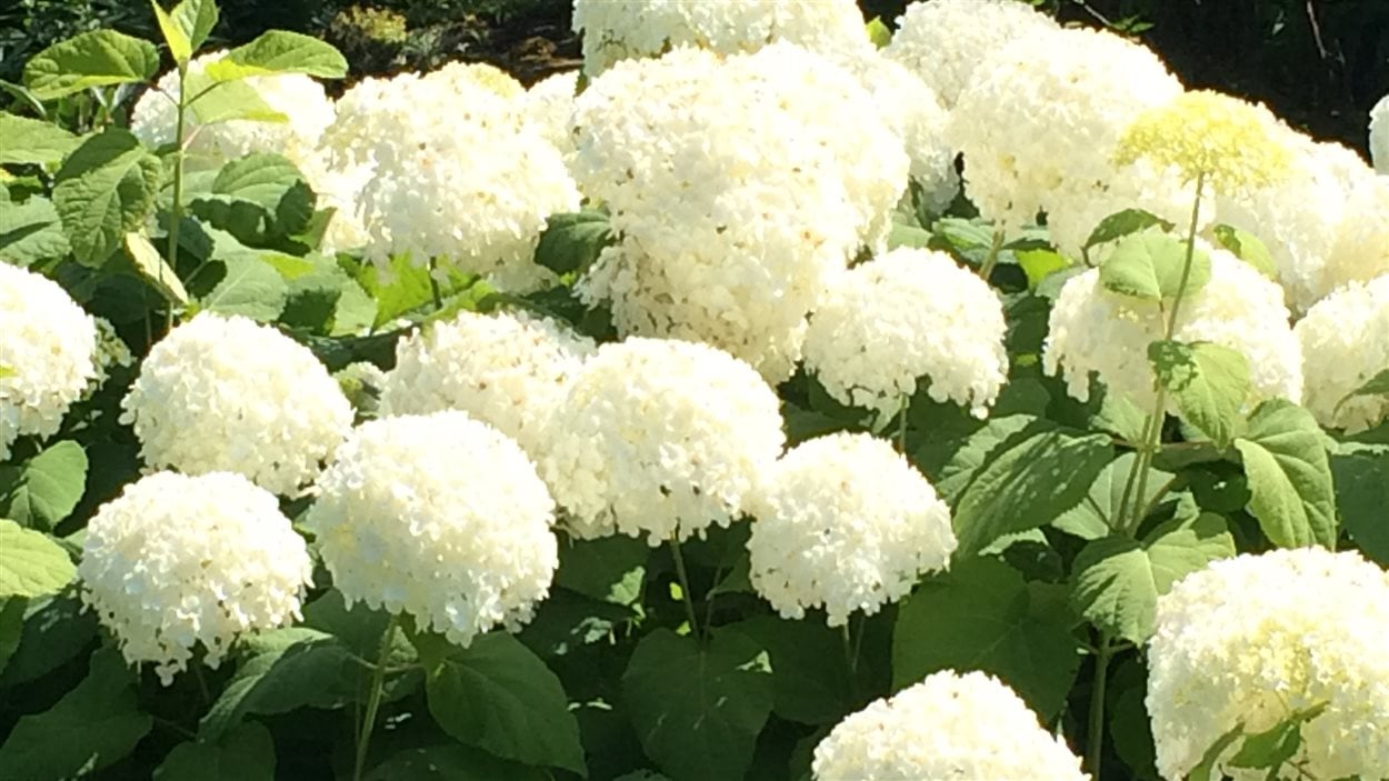 fleurs jardins de métis