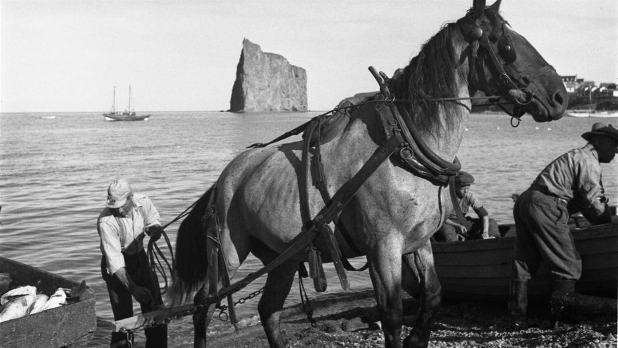 Lida Moser : Pêcheurs chargeant de la morue fraîche sur la grève, à Percé, été 1950, image d'après un négatif original (6 x 6 cm), (P728,S1,D1,P14-1)