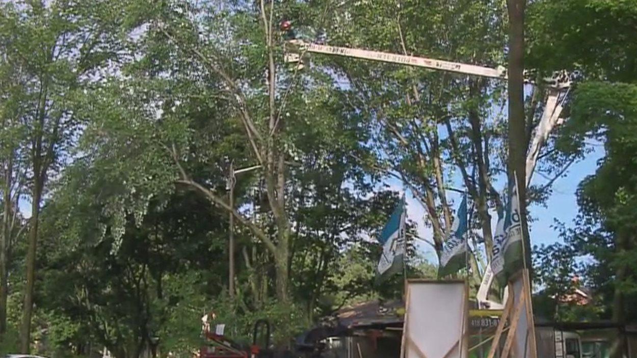 Les arbres matures occupaient une grande place dans le paysage de la rue Barrin.