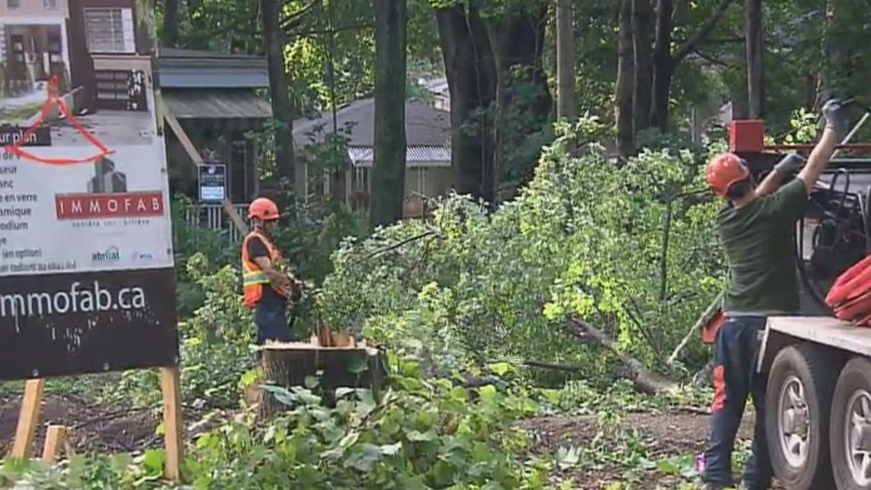 Le promoteur Immofab avait en main tous les permis pour réaliser l'abattage des arbres.