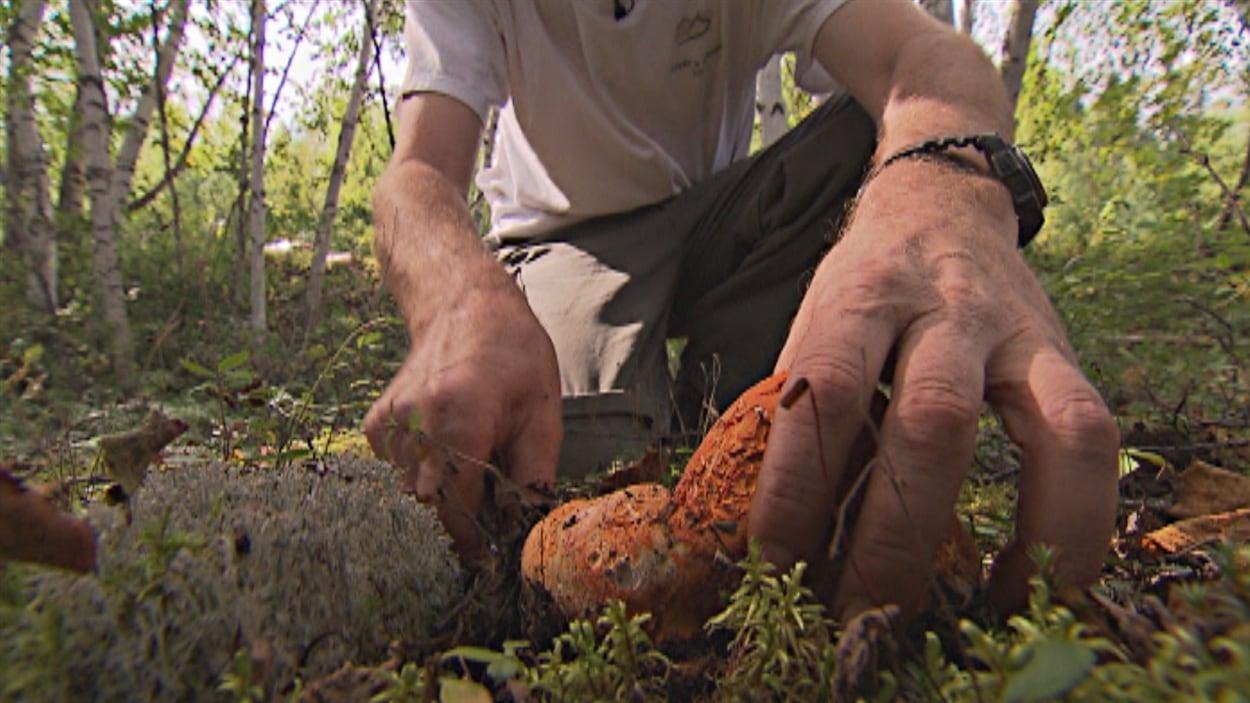 Cueillette de champignons en Haute-Mauricie