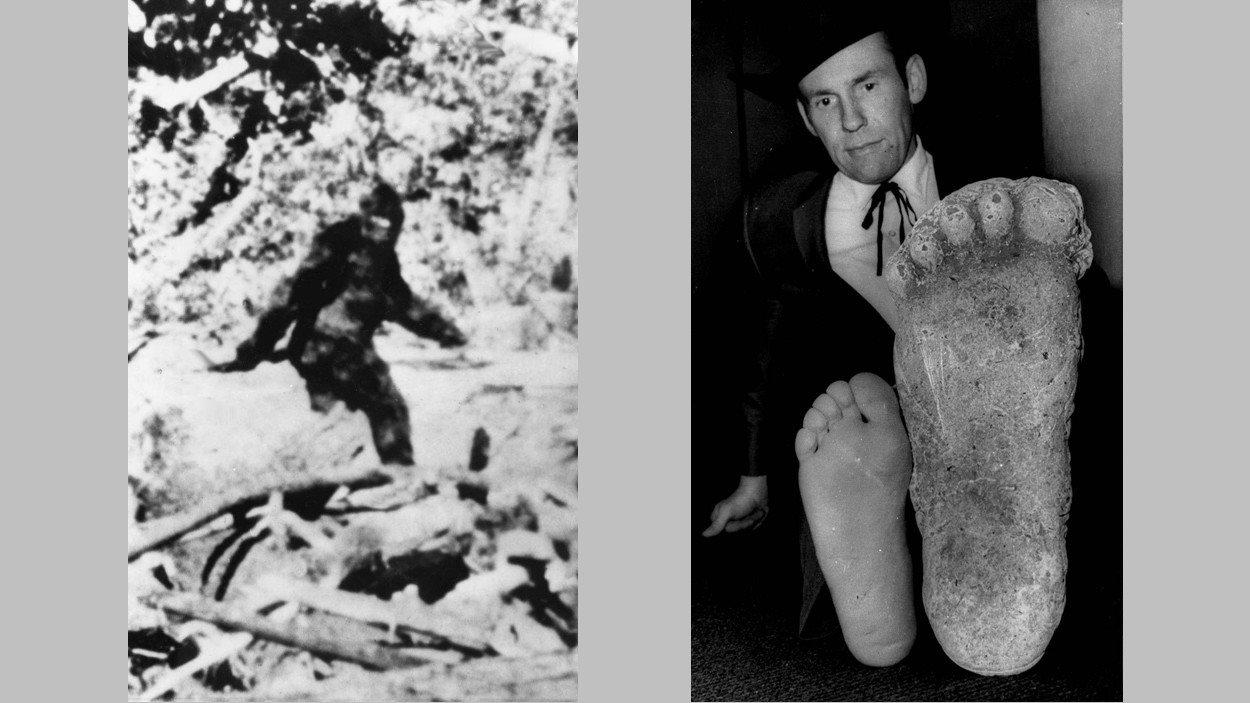 À droite, en 1967, le photographe Roger Patterson compare son pied à une empreinte qui serait celle du Sasquatch et à gauche la photo qu'il dit avoir prise de la bête mythique la même année.