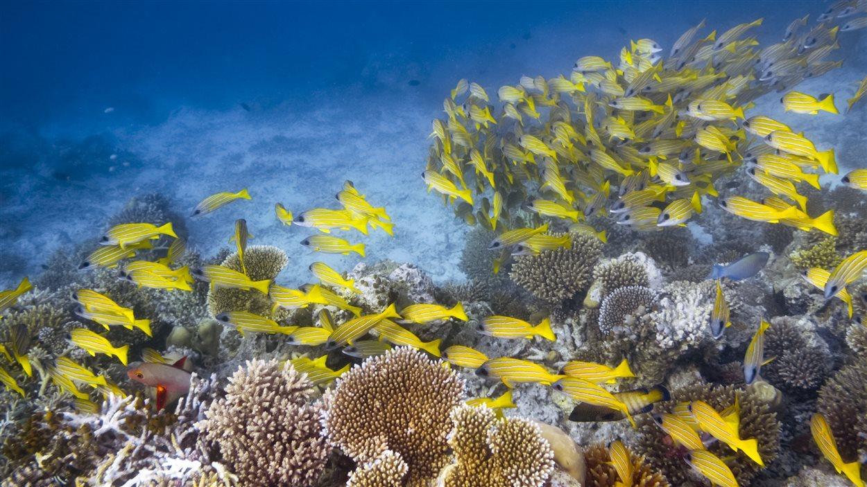Un récif corallien et des poissons
