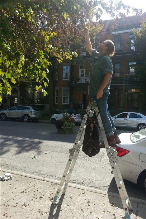 Cuiellette de fruits à Montréal