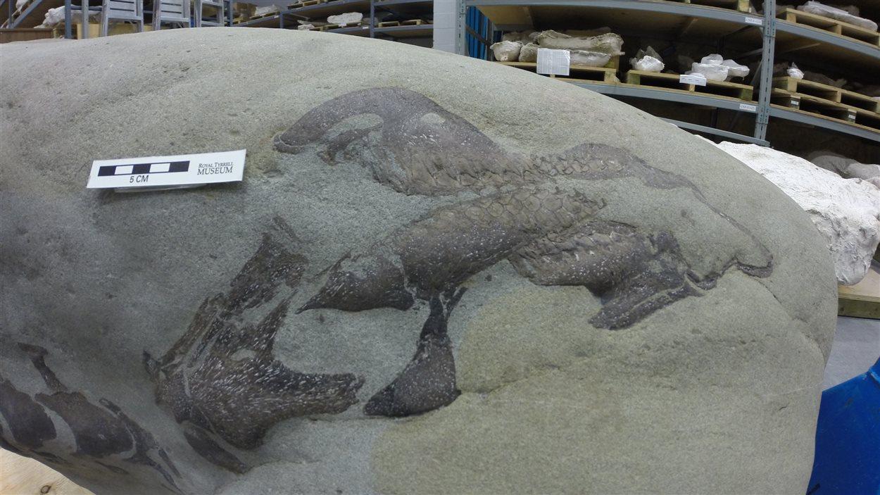 Des experts croient que ce fossile est celui d'un nouveau dinosaure