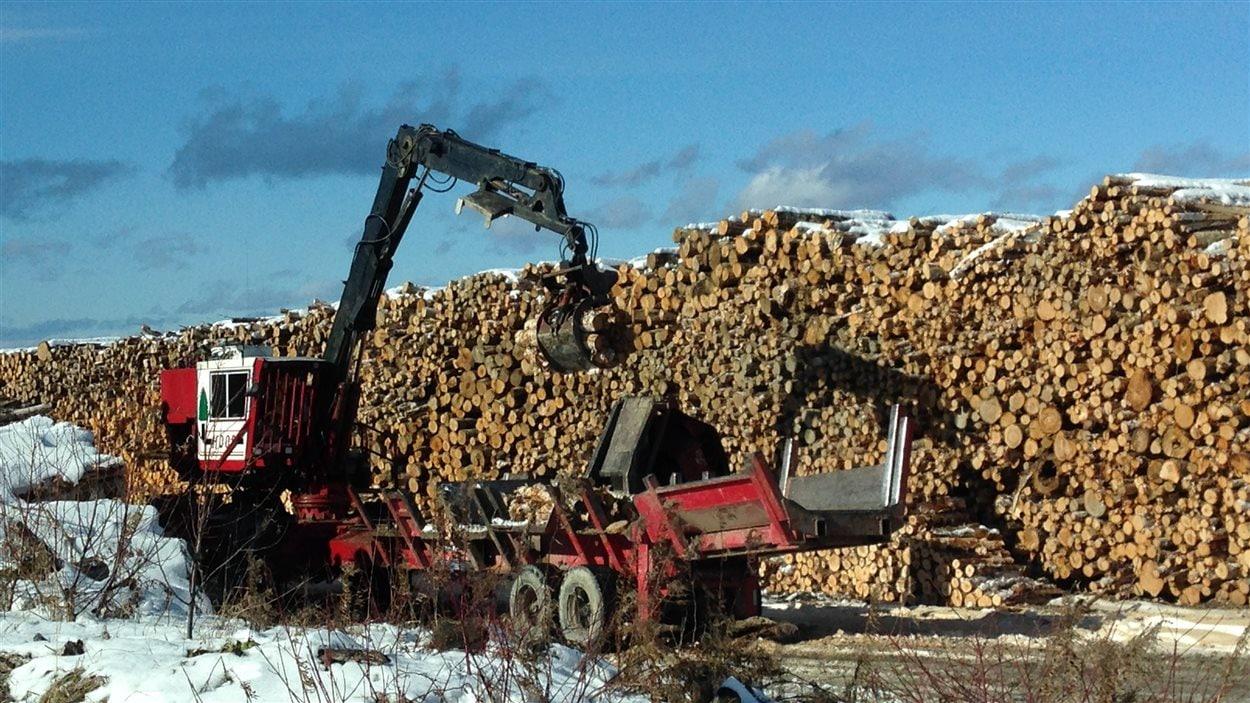 Une pile de troncs d'arbres