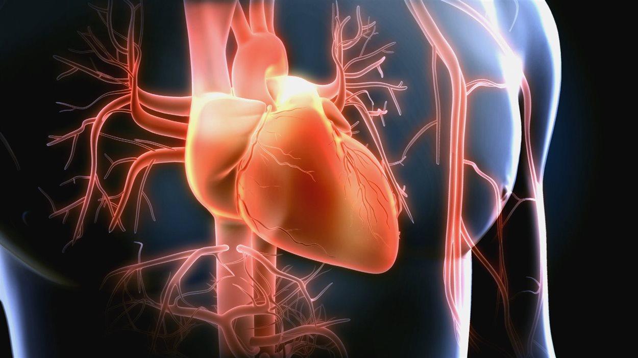 Infographie de coeur et de ses artères et vaisseaux
