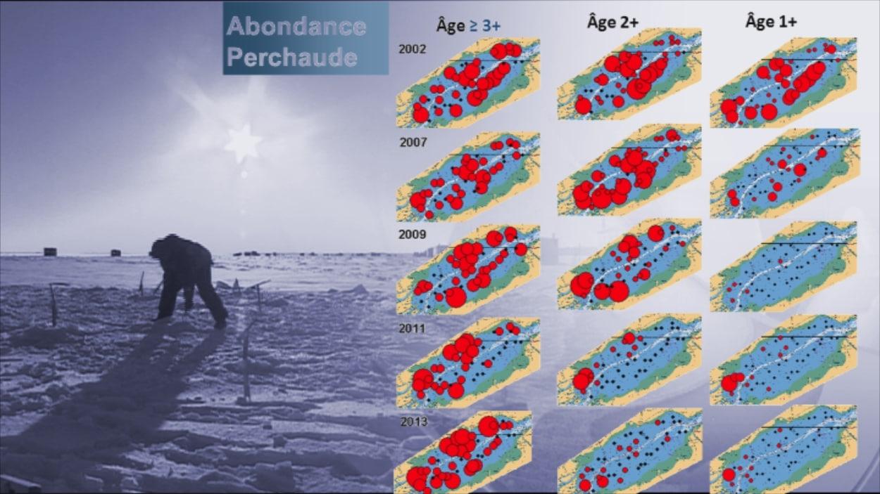 Nombre de perchaudes dans le lac Saint-Pierre, de 2002 à 2013, selon leur âge