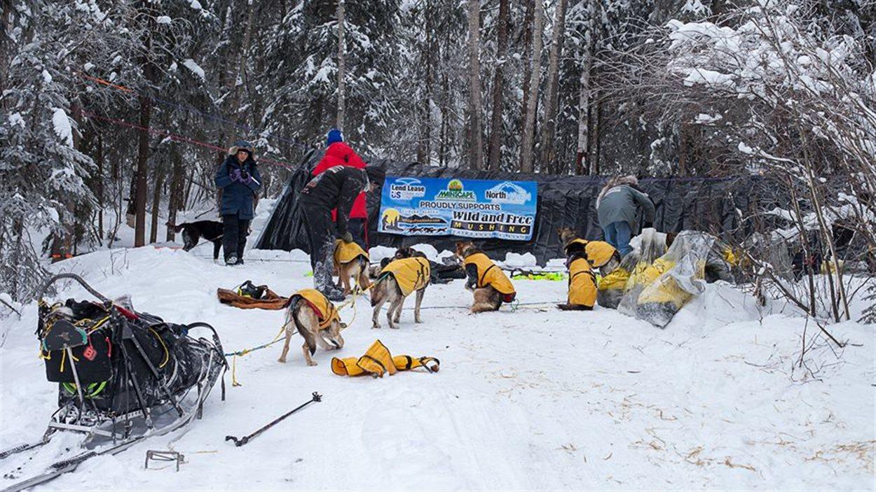 Une équipe de traîneau à chiens arrive au site de campement.