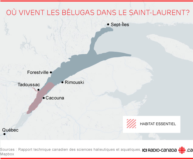 Où vivent les bélugas dans le Saint-Laurent?