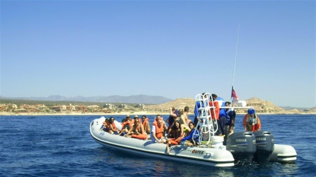 Ce bateau est entré en collision avec une baleine lors d'une excursion près de Cabo San Lucas au Mexique.