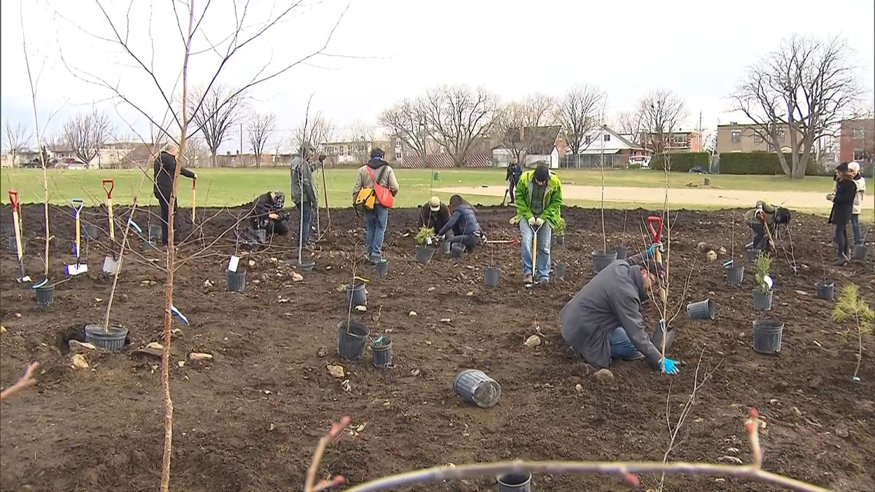 Des gens plantent des arbres pour le Jour de la Terre