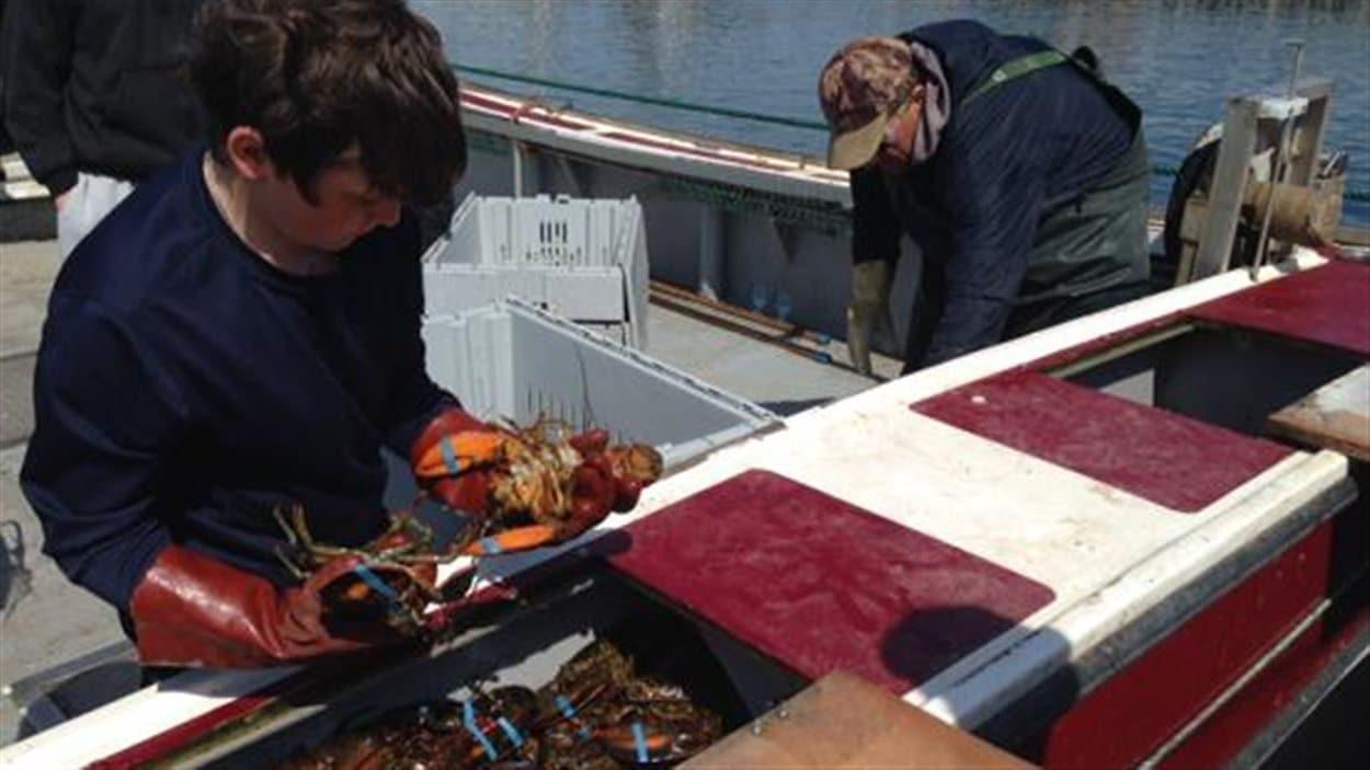 Premiers débarquements de homard aux Îles-de-la-Madeleine