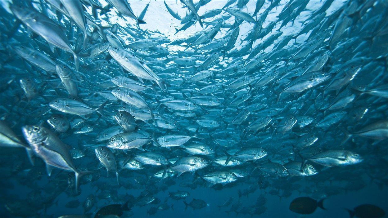 po_poissons
